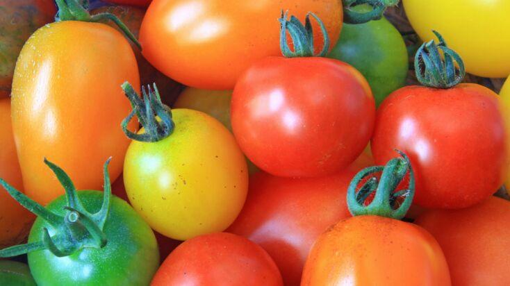 Tout savoir sur les tomates