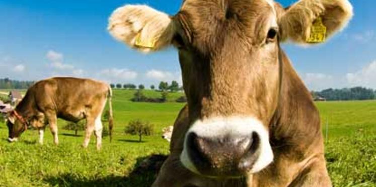 Près des trois-quarts des Français achètent des aliments chez les producteurs
