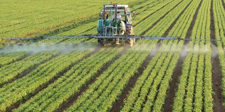 Bayer-Monsanto : le cri d'alarme de plusieurs chefs