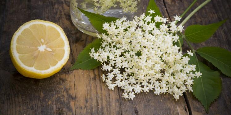 La fleur de sureau, une nouvelle saveur à découvrir