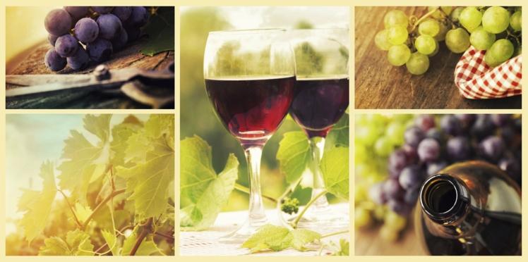 Bientôt une initiation au vin dès 17ans ?