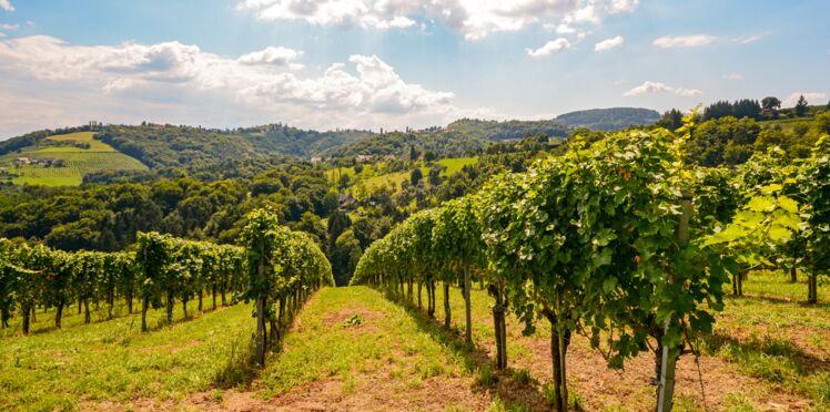 Le meilleur des vins rouges naturels