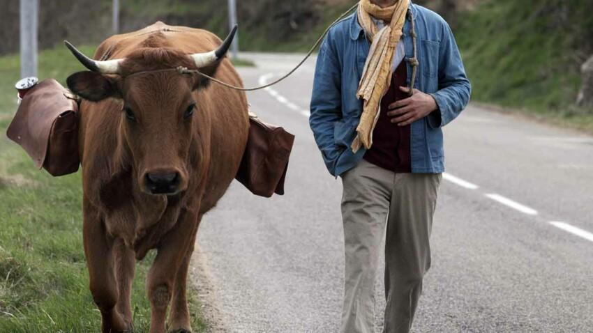 """Ciné : on a vu et aimé """"La vache"""" et """"Zootopie"""""""