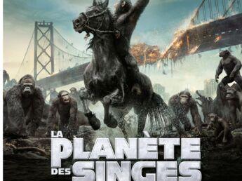 Coup de coeur ciné : La planète des singes et New York Melody
