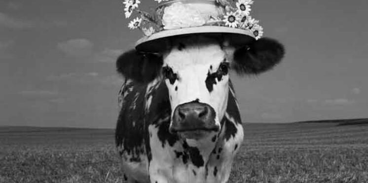 Oh la vache, découvrez l'exposition !