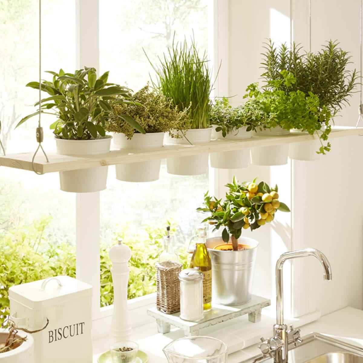 Je fabrique un jardin suspendu pour ma cuisine : Femme Actuelle Le MAG