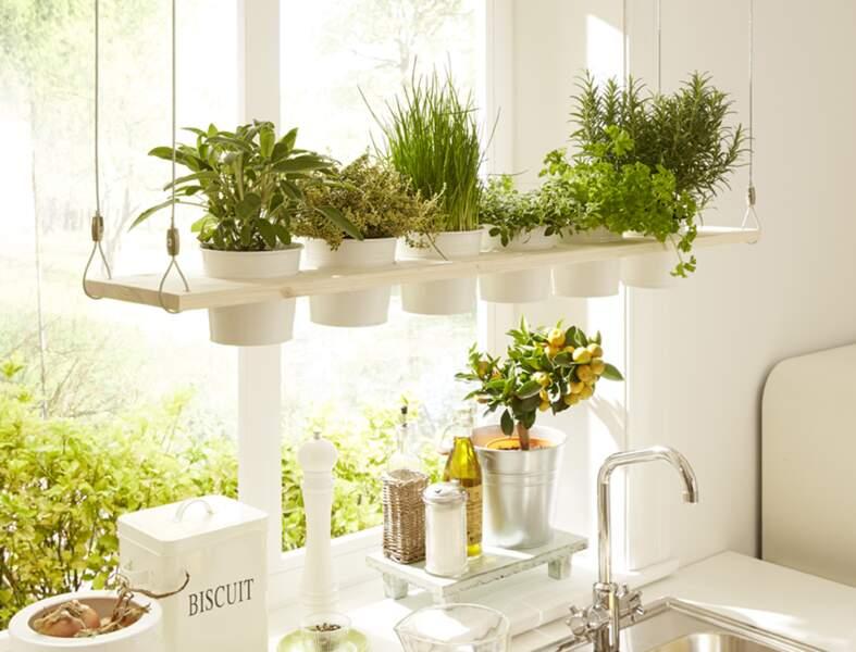 Un jardin suspendu pour la cuisine