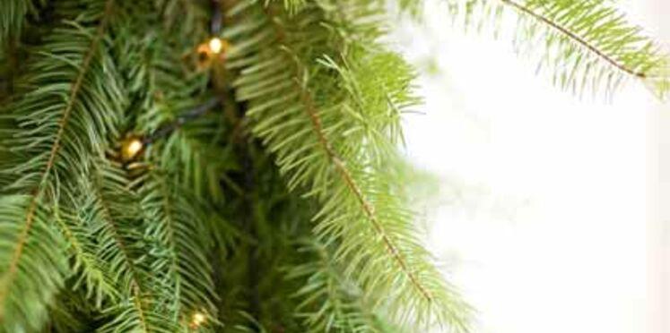 Recycler et valoriser son sapin après les fêtes