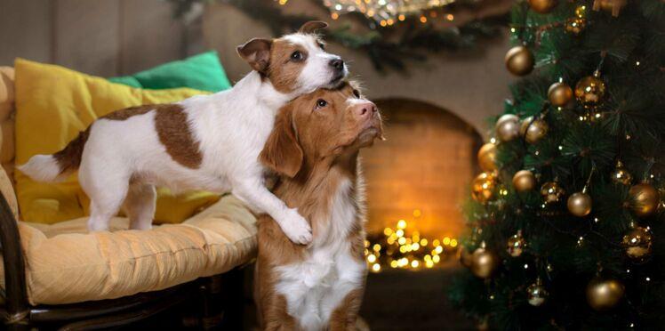 Les 5 astuces géniales pour faire durer son sapin de Noël