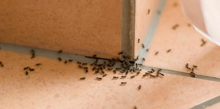Nos astuces naturelles pour se débarrasser des fourmis chez soi