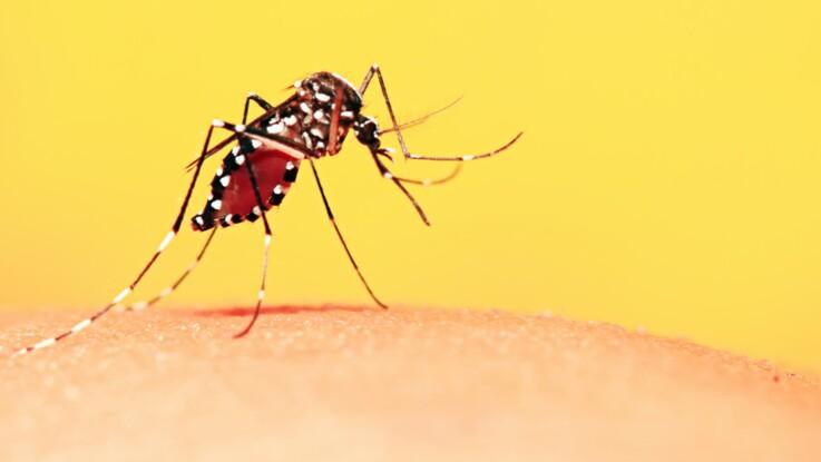 L Erreur Que L On Fait Tous Et Qui Attire Les Moustiques