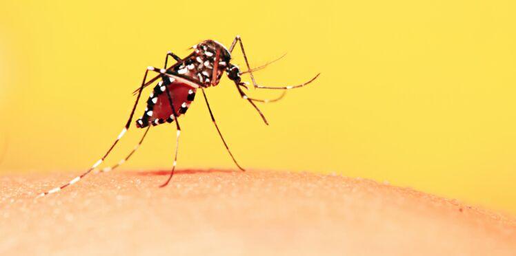 L'erreur que l'on fait tous et qui attire les moustiques dans notre maison