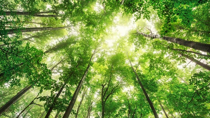 Filières et origines du bois : comment acheter plus éthique ?