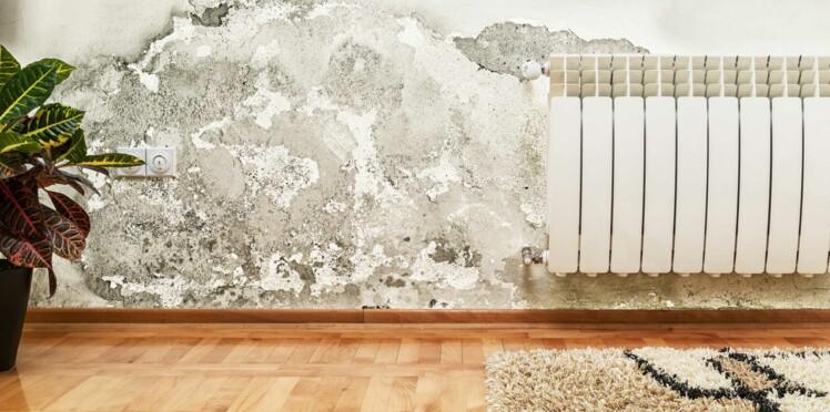 Moisissure au mur : comment s'en débarrasser ?