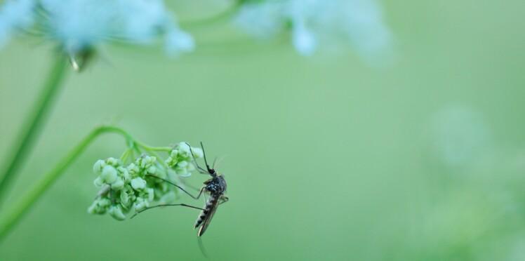 Moustiques : comment s'en débarrasser et notre sélection de produits efficaces