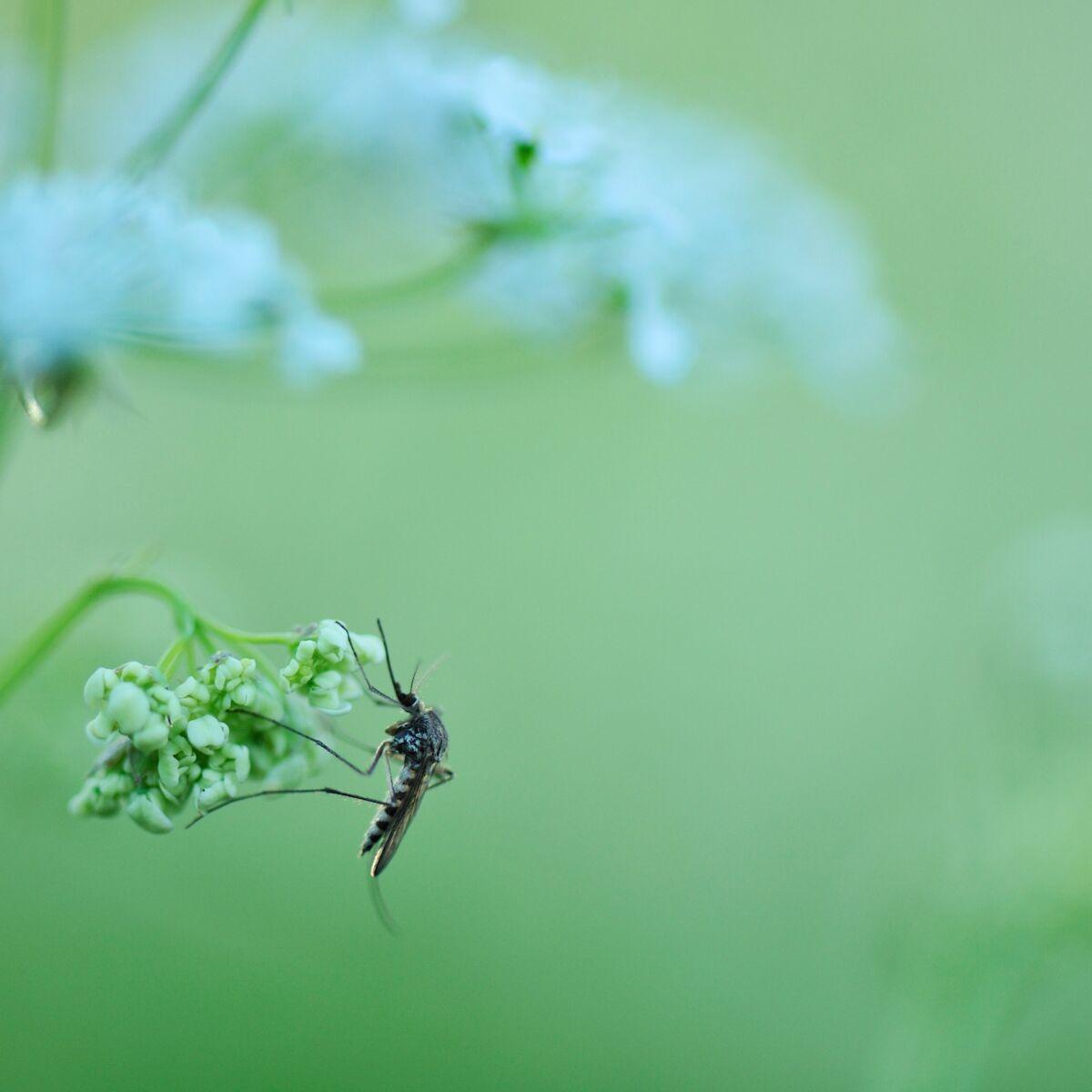 Comment Éloigner Les Mouches À L Extérieur moustiques : comment s'en débarrasser et notre sélection de