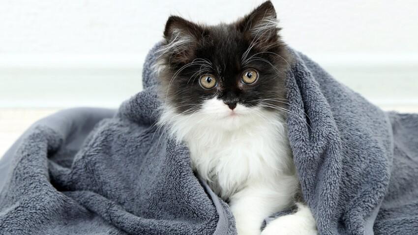 A quelle fréquence faut-il laver les serviettes de toilette ?