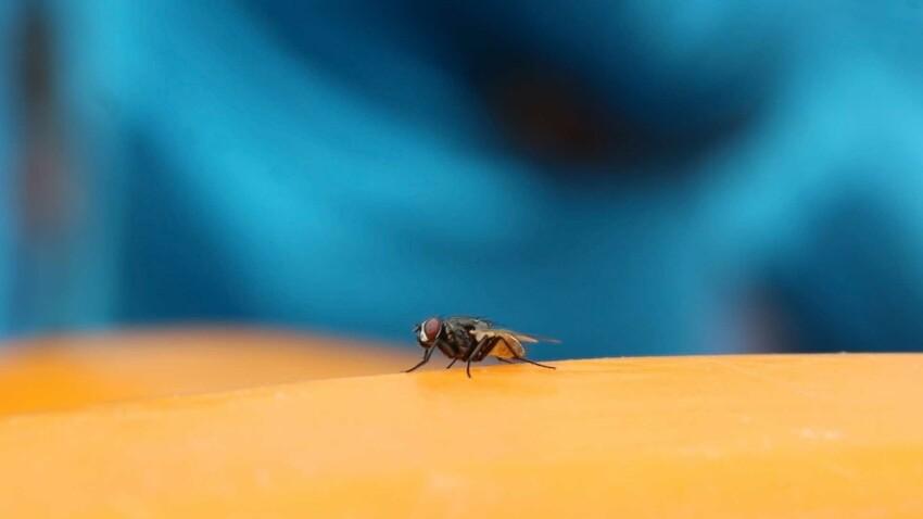 Nos recettes naturelles pour se débarrasser des mouches
