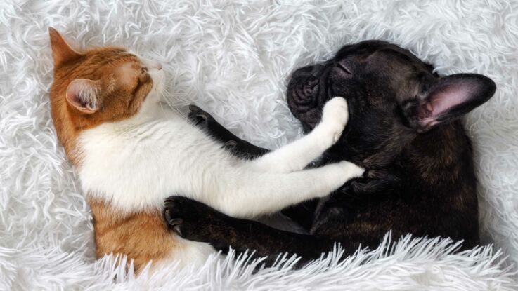 Les astuces géniales pour retirer les poils de chat ou chien