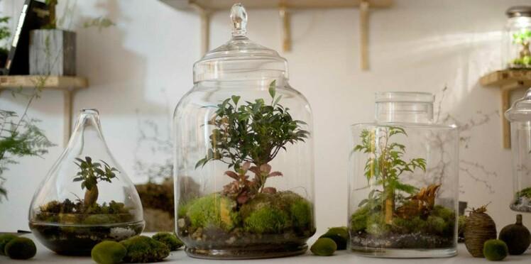 Un terrarium pour ma déco de salon