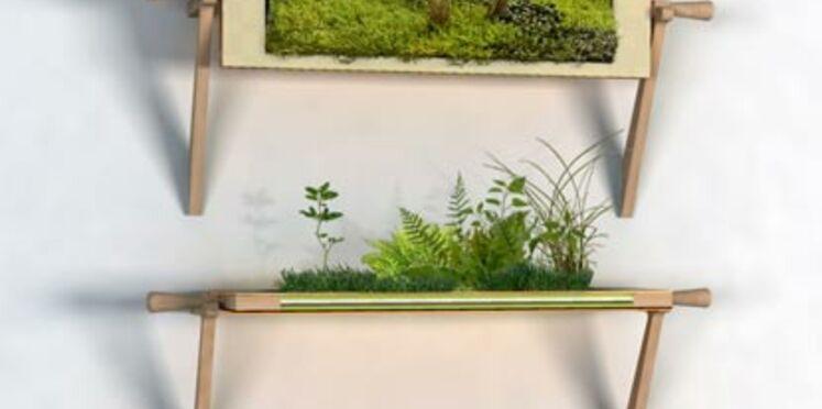 Le Design végétal à l'honneur chez Sabz