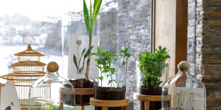 Les plantes vertes se mettent au verre