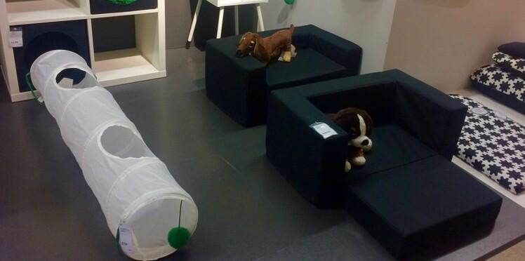IKEA lance sa nouvelle collection… pour animaux !