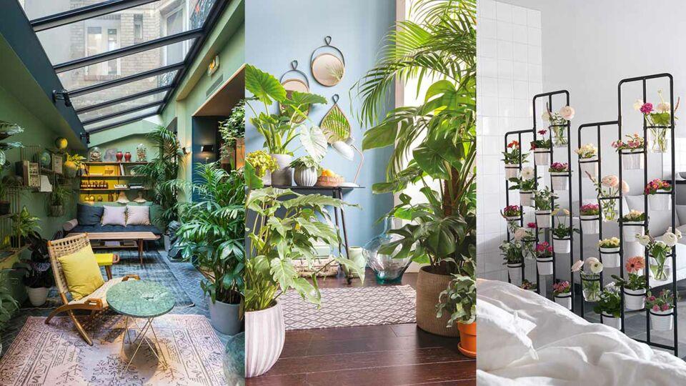 Plantes d'intérieur : la nouvelle tendance déco