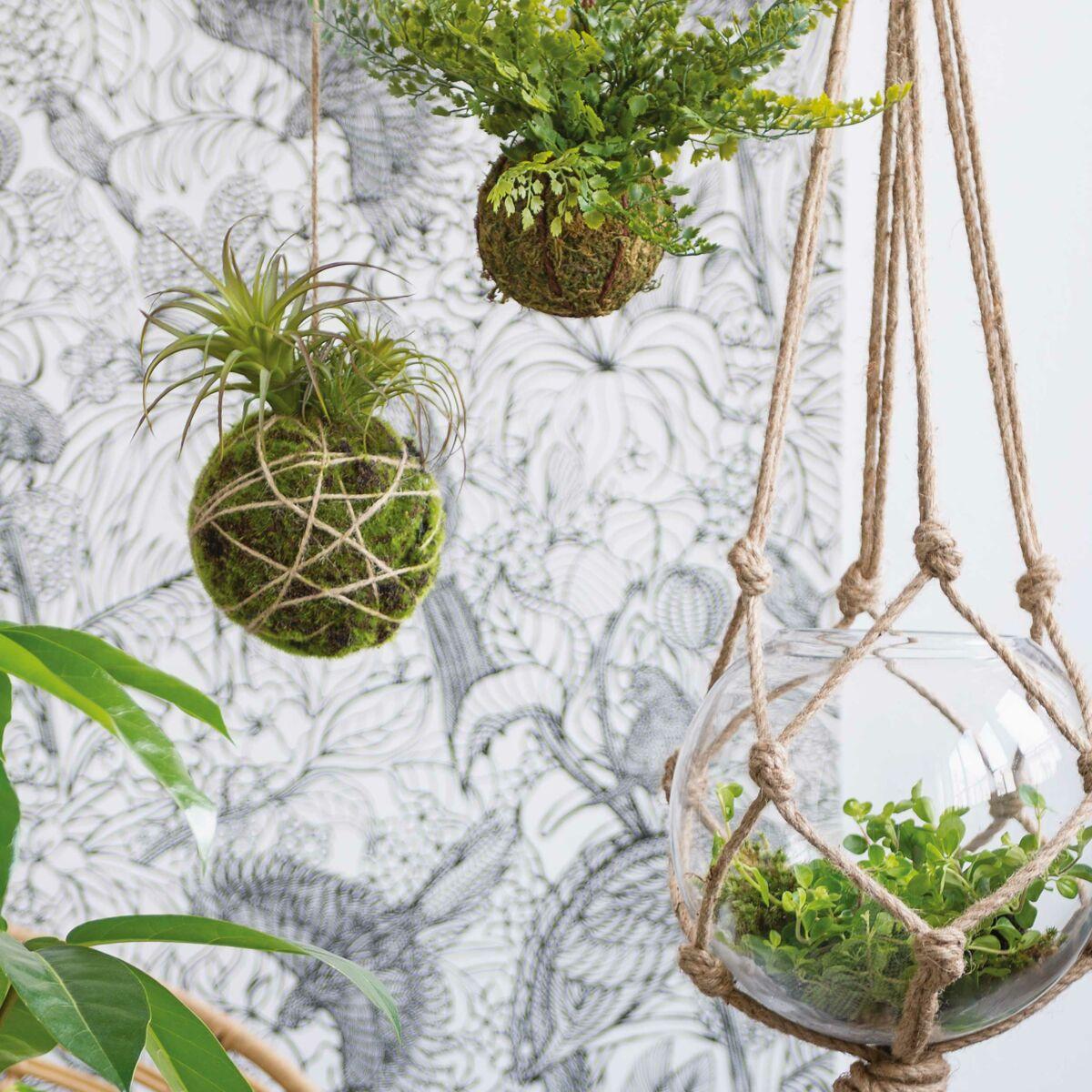 Les plantes suspendues, l'atout végétal et gain de place pour ma ...