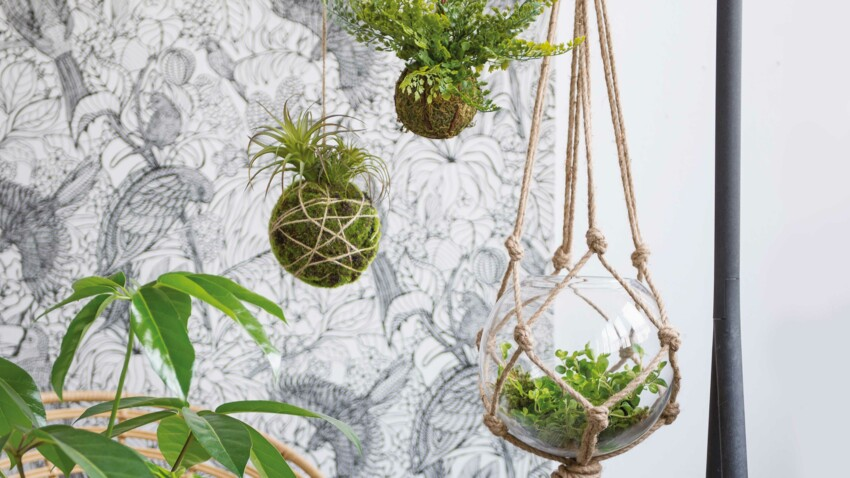 Les plantes suspendues, l'atout végétal et gain de place pour ma déco