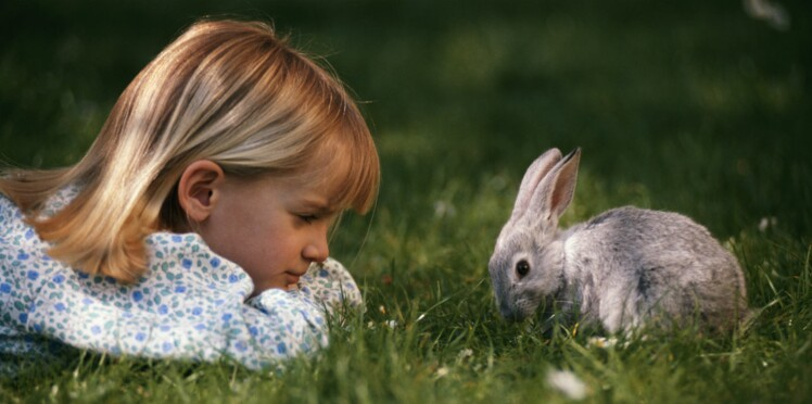 « Enseignons à l'école l'empathie pour les animaux ! »