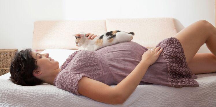Toxoplasmose : pourquoi il faut faire attention pendant la grossesse