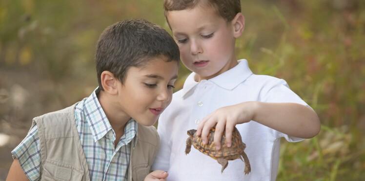 Vous souhaitez acheter une petite tortue à votre enfant ? Attention à la Salmonelle !