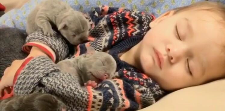 Des siestes très câlines (et canines)