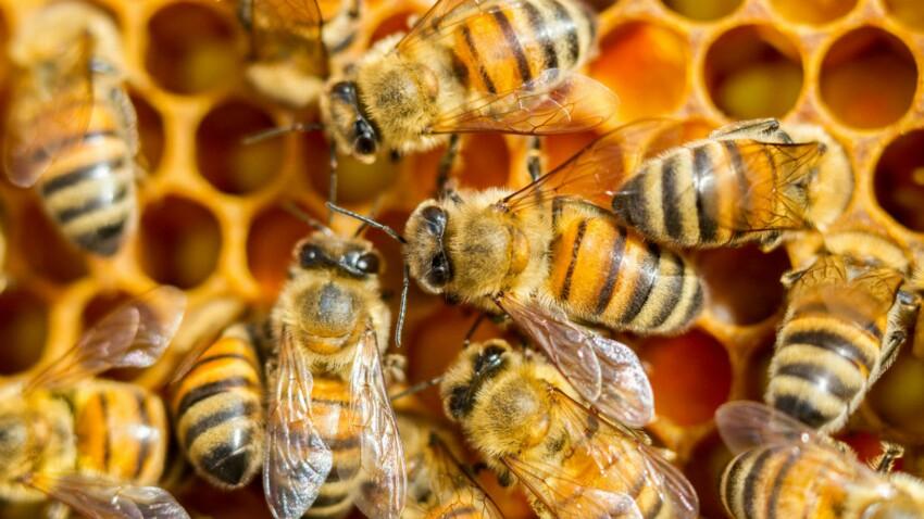 Enceinte, elle pose pour une étrange séance photo avec 20 000 abeilles autour d'elle