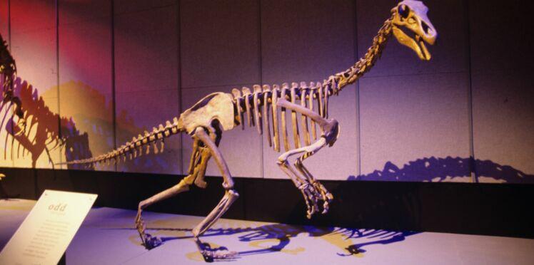 Un enfant autiste repère une erreur au musée d'histoire naturelle de Londres et la fait corriger