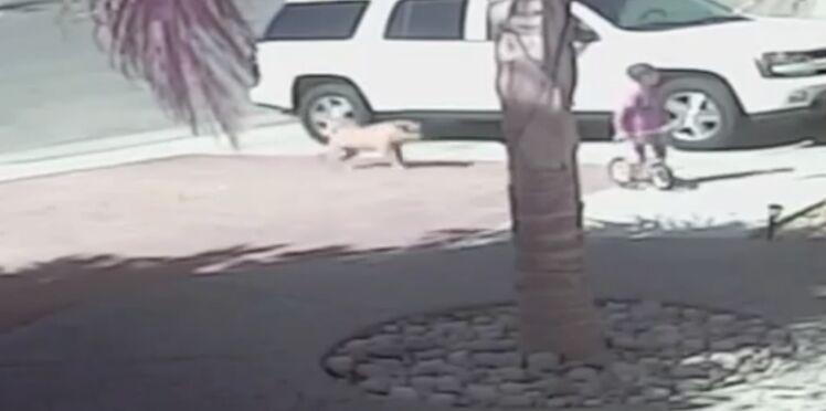 Buzz vidéo : un enfant de 4 ans sauvé par son chat