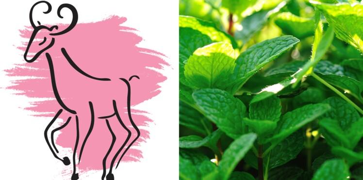 La plante porte-bonheur du Bélier : la menthe