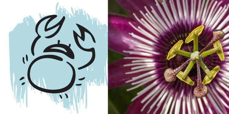 La plante porte-bonheur du Cancer : la passiflore