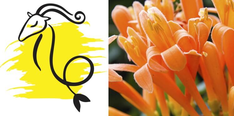 La plante porte-bonheur du Capricorne : le chèvrefeuille