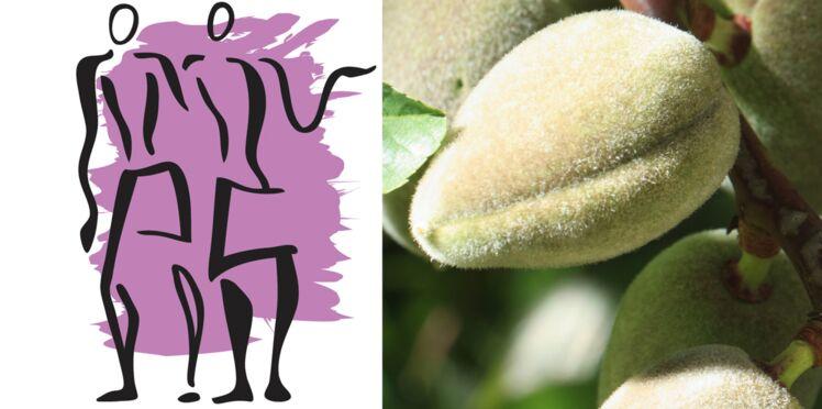 La plante porte-bonheur du Gémeaux : l'amandier