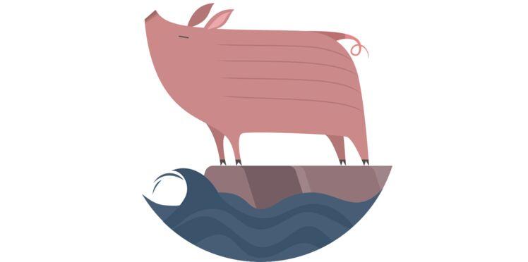 Horoscope chinois 2018 : prévisions pour le Cochon