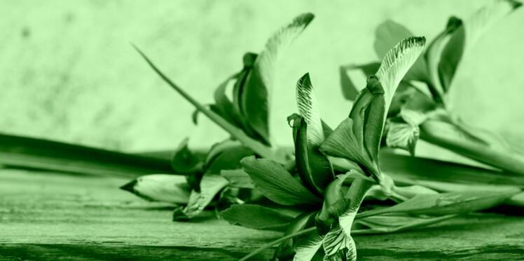 30/08-25/09 : L'iris des mers, votre portrait en horoscope tahitien