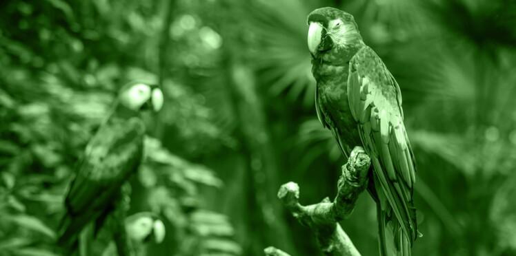 03/12-09/01 : Le perroquet multicolore, votre portrait en horoscope tahitien