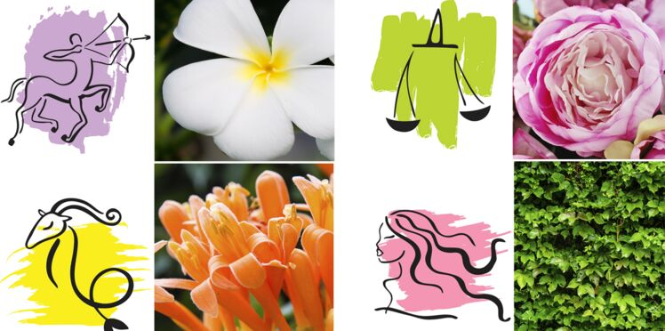 Horoscope : votre plante porte-bonheur signe par signe