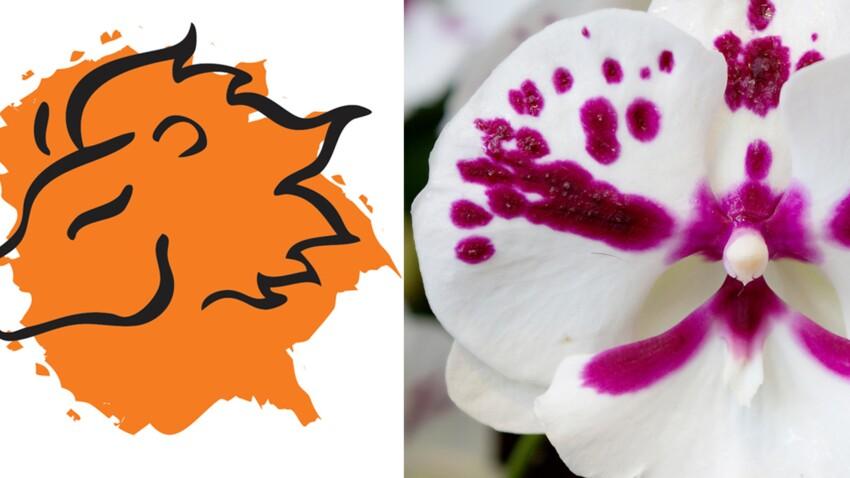 La plante porte-bonheur du Lion : l'orchidée-papillon