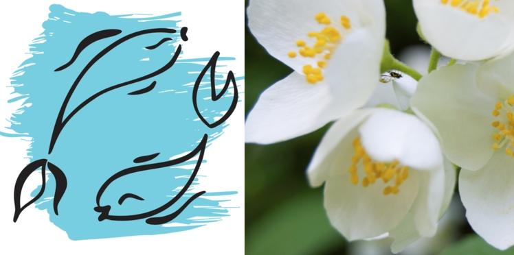 La plante porte-bonheur du Poissons : le jasmin