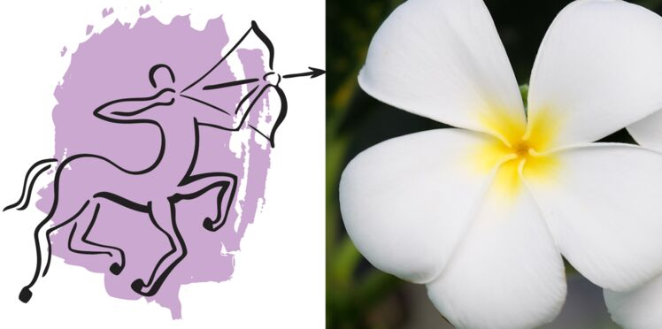 La plante porte-bonheur du Sagittaire : le frangipanier