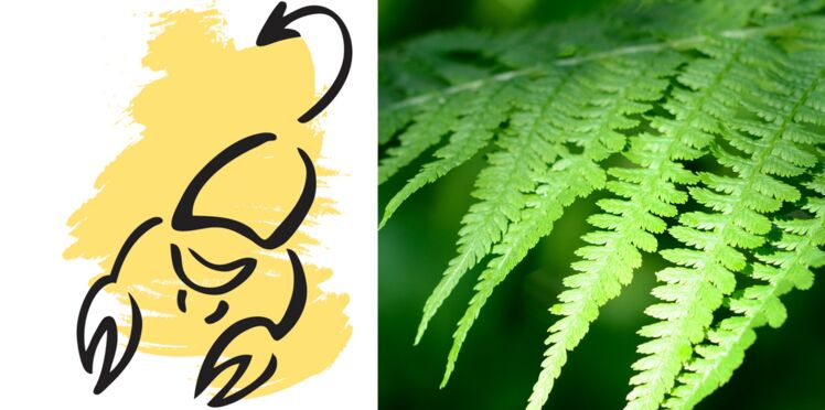 La plante porte-bonheur du Scorpion : la fougère