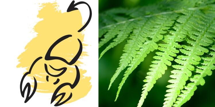 La plante porte bonheur du scorpion la foug re femme actuelle le mag - Plante d interieur porte bonheur ...